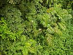Costa Rican scene 6qw