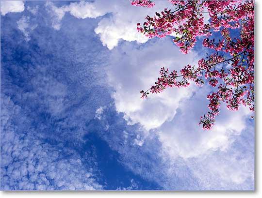 Sky Factory SkyCeiling image