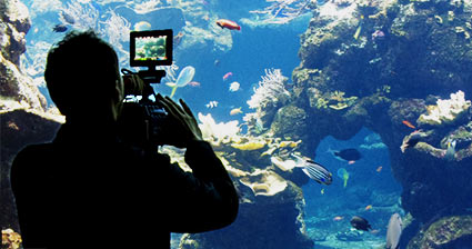 Sky Factory Photographer preparing to capture an eSea Scene at the Tennessee Aquarium