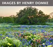 Images by Henry Domke