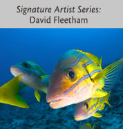 Signature Edition Series: David Fleetham