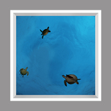 Ceiling Design kf-se-df060_4x4md_r44 by David Fleetham