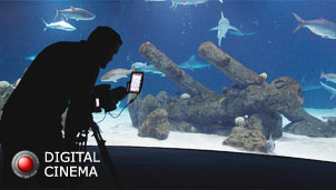 Sky Factory photographer recording digital fish tank scene in an aquarium
