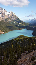 Early Morning above Peyto Lake: Canadian Rockies
